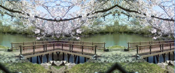 桜の美景観